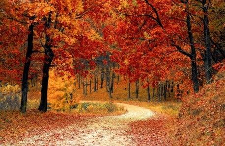 Meble i dekoracje w ciepłych, jesiennych odcieniach
