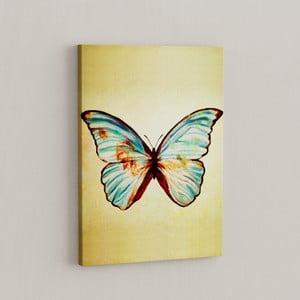 Obraz Motyl, 50x70 cm
