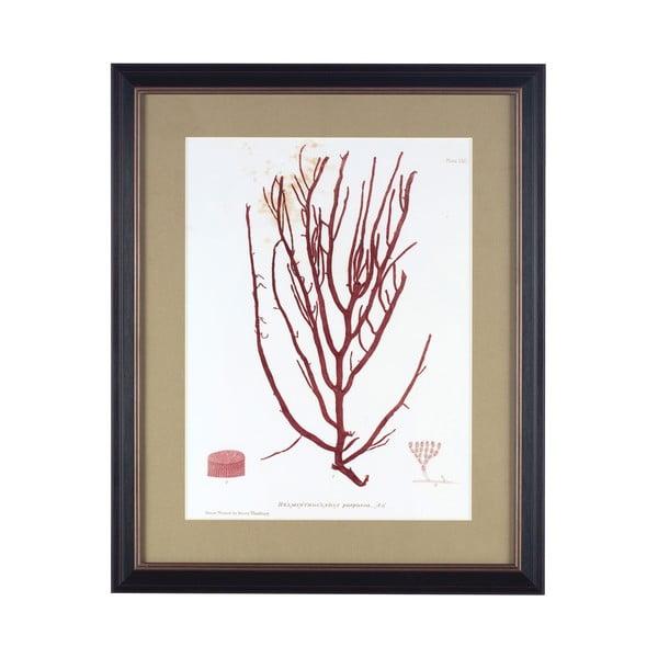 Obraz Alga I, 45x55 cm