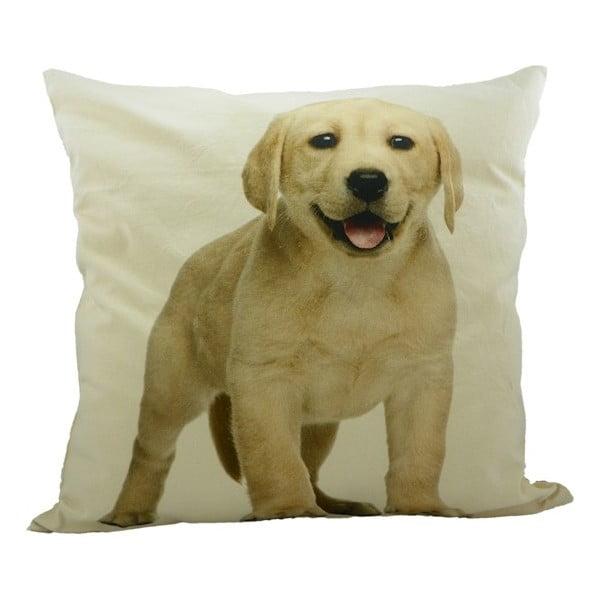 Poduszka Labrador Blond 50x50 cm