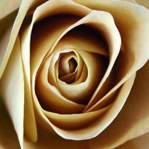 Obraz na szkle Róża I, 20x20 cm