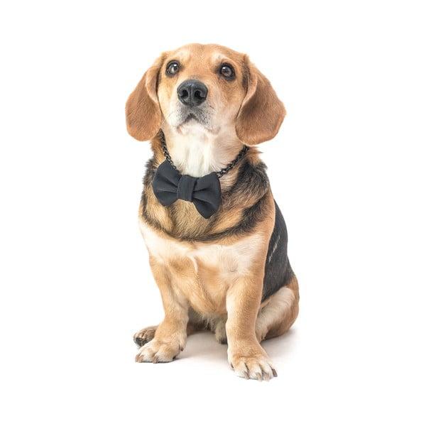 Mucha dla psa Funky Dog Bow Ties, roz. L, czarna