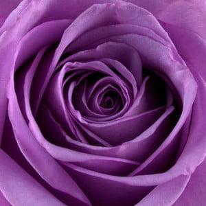 Obraz na szkle Róża III, 20x20 cm