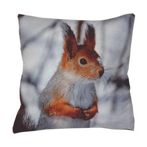 Poduszka Animals Squirrel, 42x42 cm