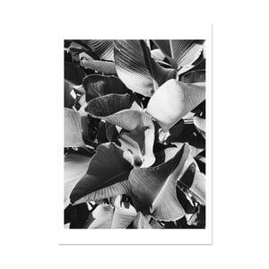 Plakat HF Living Botanic Aphrodite, 21x30 cm
