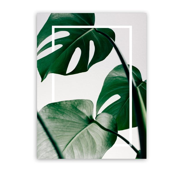 Obraz Styler Canvas Greenery Monstera, 60x80 cm