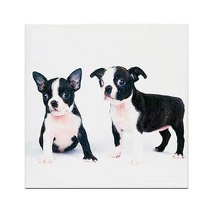 Drewniana tabliczka Little Puppies, 30x30 cm