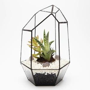 Terrarium z roślinami Gem