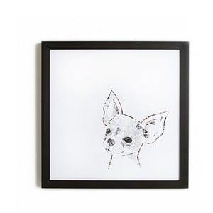 Obraz w ramie Graham & Brown Chihuahua,40x40cm