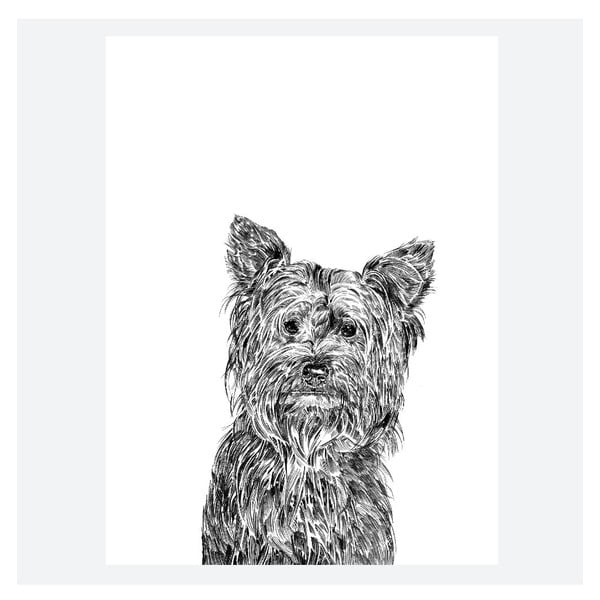 Plakat Freddie the Yorkshire Terrier, 30x40 cm