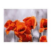 Szklany obraz Red Spot Poppies 60x80 cm