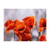 Szklany obraz Red Spot Poppies 60x80 cm