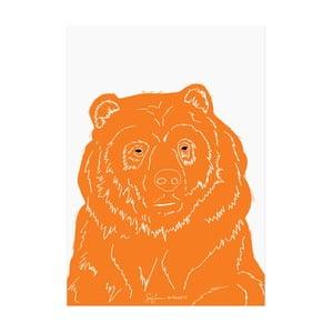 Plakat Niedźwiedź