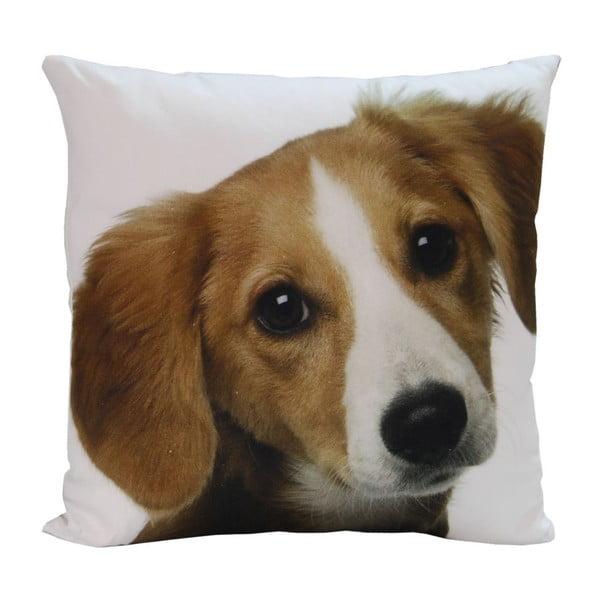 Poduszka Happy Dog, 45x45 cm
