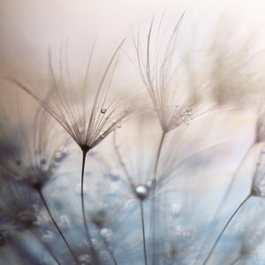 Szklany obraz Teardrops 50x50 cm