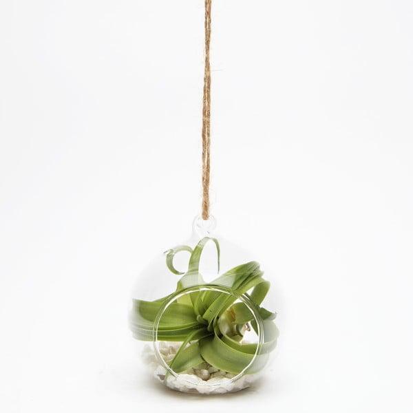 Terrarium z roślinami Epiphyte