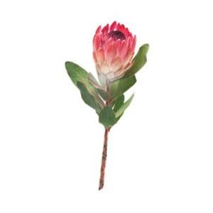 Naklejka dekoracyjna CousCous Protea