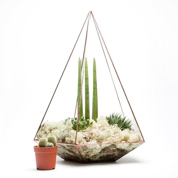 Terrarium z roślinami Supersize Jewel, w jasnej ramce