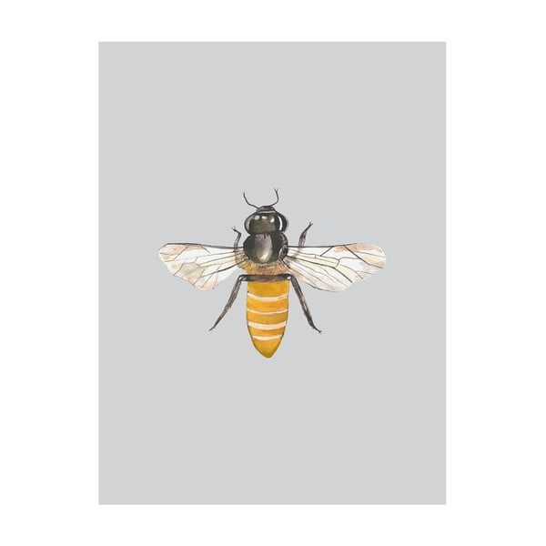 Plakat Little Bee, 40x50 cm