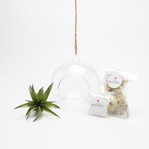 Terrarium z roślinami Globe Mini DIY