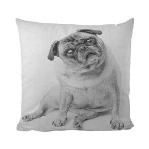 Poduszka Piggy Dog, 50x50 cm