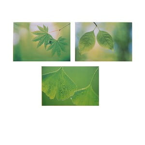 Zestaw 3 obrazów na drewnie Leaves, 50x36 cm