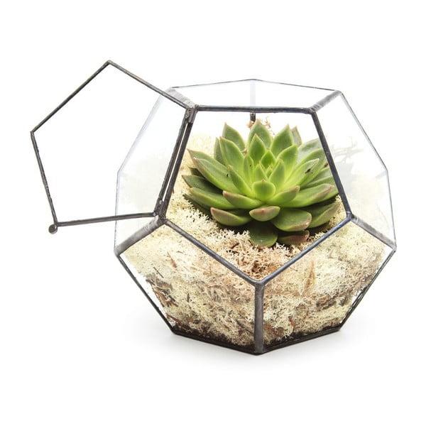 Terrarium z roślinami Penta