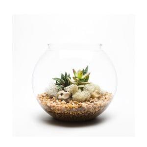 Okrągłe Terrarium z roślinami Natural