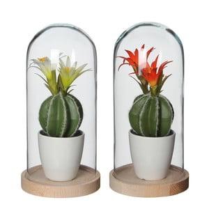 Zestaw 2 dekoracji ze sztucznymi kaktusami v květu Mica Hella, 26x12,8cm