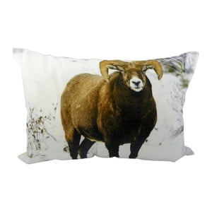 Poduszka Sheep Brown 50x35 cm