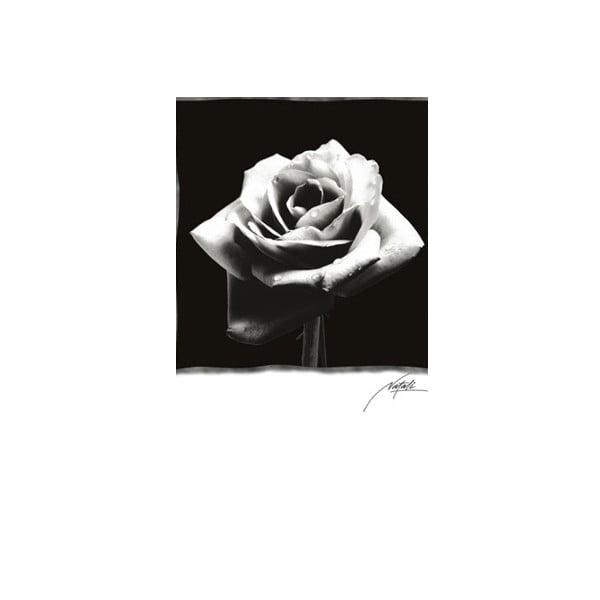 Foto-obraz Rose , 81x51 cm