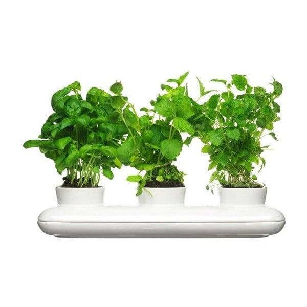 Doniczka na zioła Sagaform Trio Herb