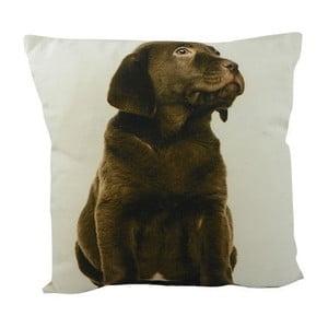 Poduszka Double Labrador Brown 33x33 cm