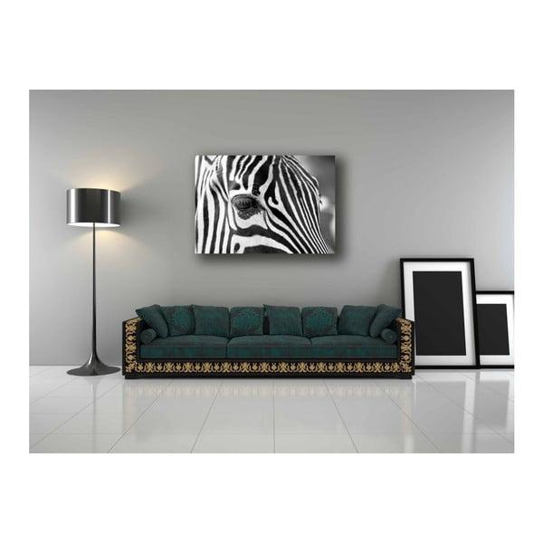 Obraz DecoMalta Zebra, 80x60cm