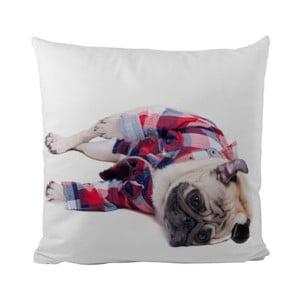Poduszka Sleepy Pug, 50x50 cm