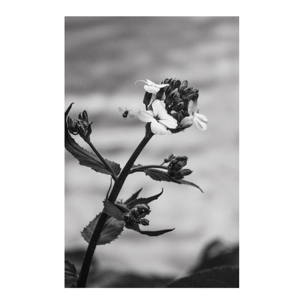 Obraz Black&White Flower, 45x70 cm
