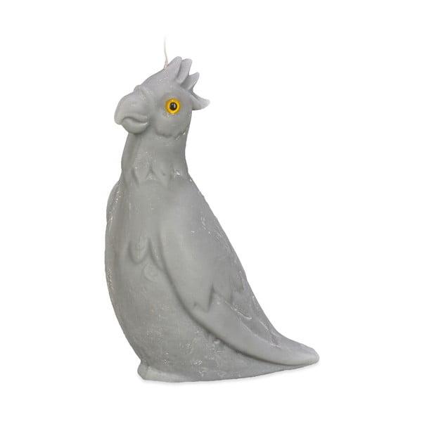 Świeczka Papużka, szara