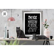 Plakat Dogs Masters Cats Staff BW, A3