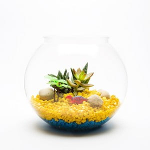 Okrągłe Terrarium z roślinami Dinosaur