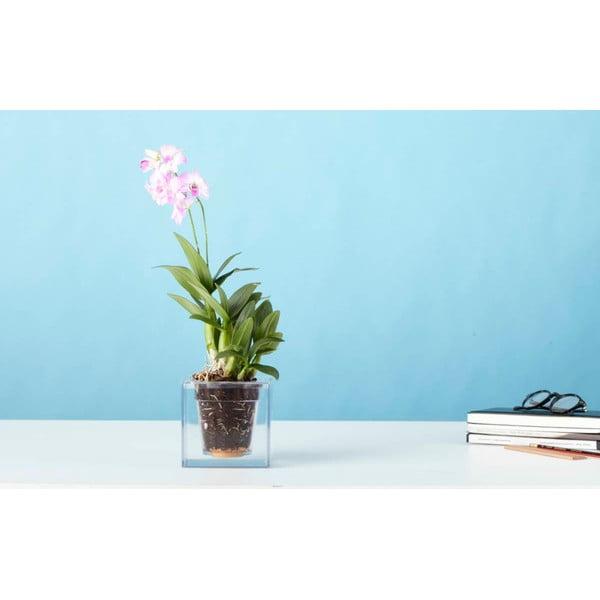 Doniczka nawadniająca rośliny Cube, mini