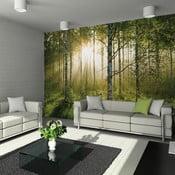 Tapeta   wielkoformatowa Forest, 315x232 cm