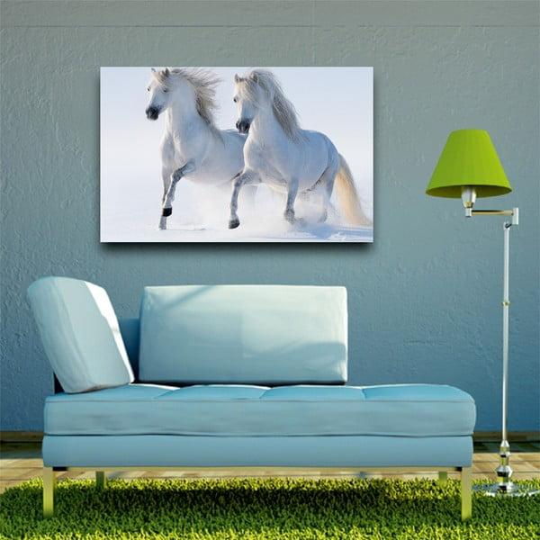 Obraz Biały koń, 45x70 cm