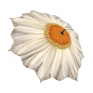 Parasolka Flower Collection, daisy