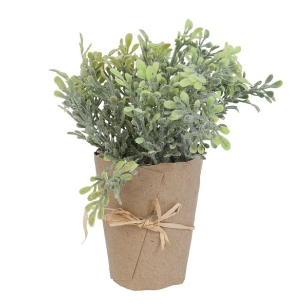 Kwiat dekoracyjny Plant