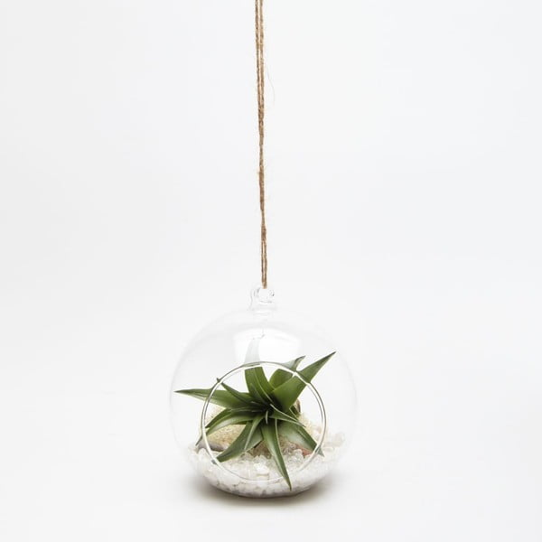 Terrarium z roślinami Globe Mini