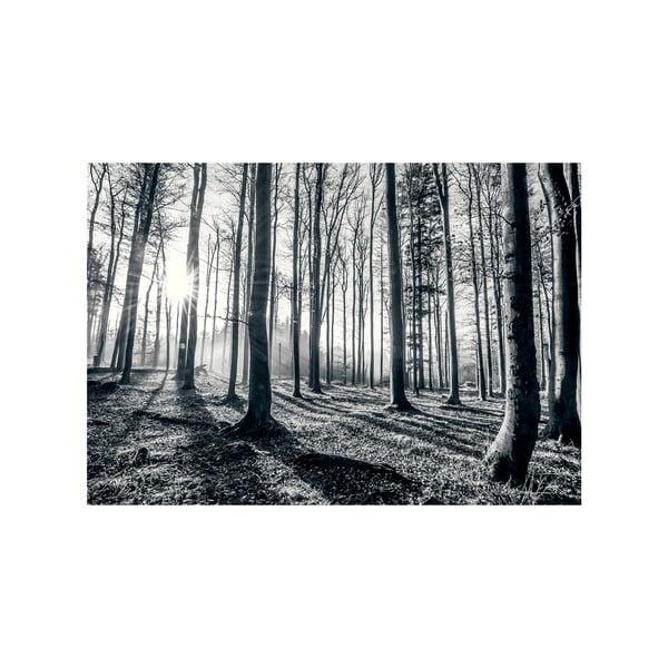 Tapeta wielkoformatowa Głęboki las, 366x254 cm