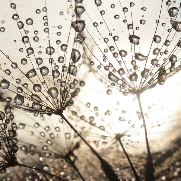 Szklany obraz Dew Drops 50x50 cm