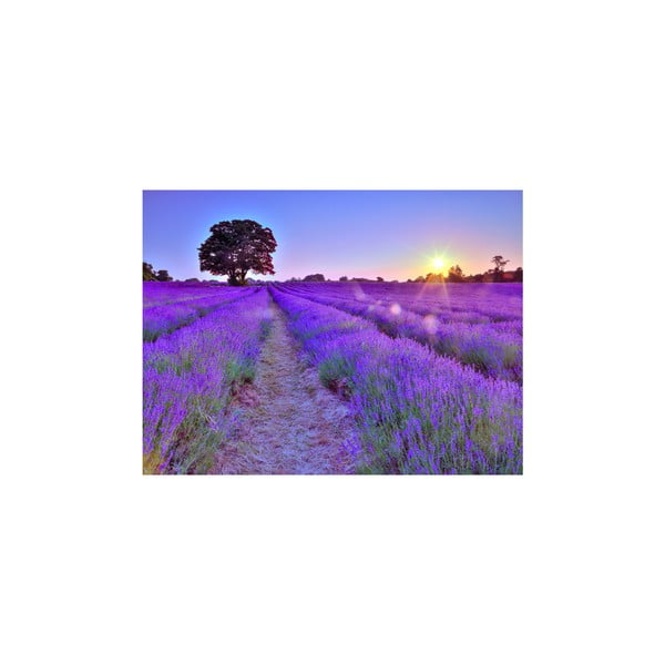 Obraz Lavender Canvas, 60x80 cm