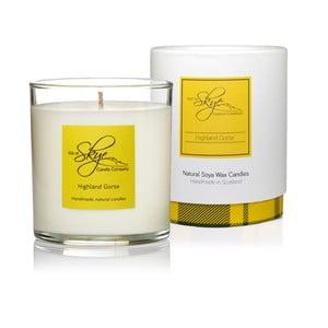 Świeczka o zapachu sosny, cedru i bursztynu Skye Candles Tumbler, 45h