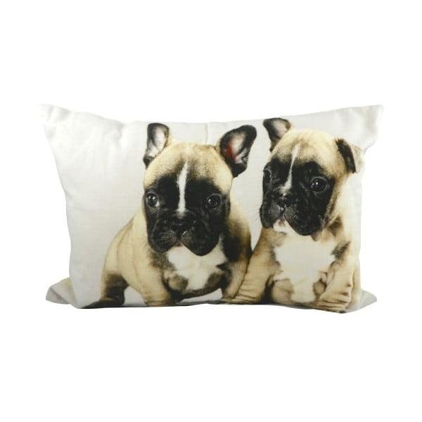 Poduszka Mars&More French Bulldog Puppies, 50x35 cm
